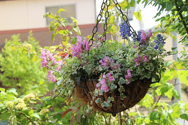 おしゃれ,庭,ガーデニング、素敵,