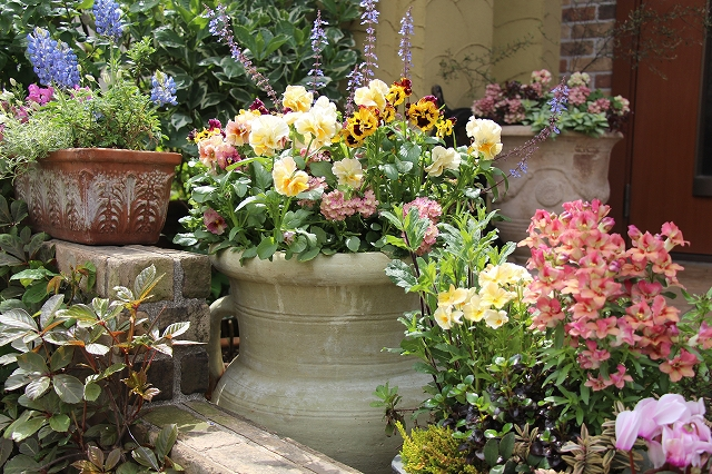おしゃれ,庭,ガーデニング、素敵,ビオラ,寄せ植え