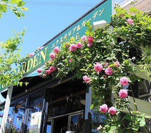 マダム・イザック・ペレール,ブルボン・ローズ,バラ,薔薇,春の庭,グレイスオブガーデン,おしゃれ
