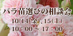 バラ,薔薇,ばら,ローズ,相談会,グレイスオブガーデン,苗