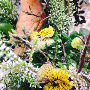 寄せ植え,クリスマスリース,冬の寄せ植え,おしゃれな寄せ植え,素敵な寄せ植え,多肉植物,グレイスオブガーデン,シクラメン,カルーナ,コロキア,ビオラ