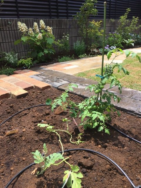 土壌改良,おしゃれ,畑,芝生,家庭菜園,日陰,ミニトマト
