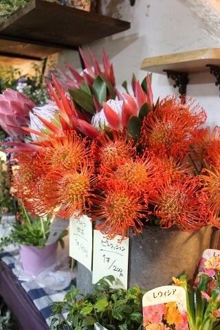 グレイスオブガーデンのオータムフェアでかわいい切花販売