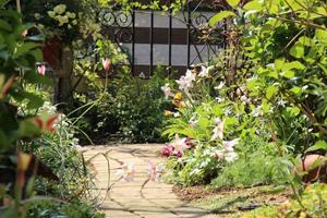 小さな庭の小道の両側に咲く原種のチューリップレディージェーン